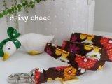 daisy choco
