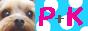首輪と胴輪のオーダーメイド 『P+K☆DOG』